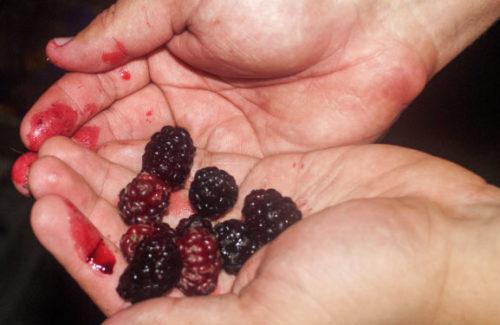 руки испачканные ягодами